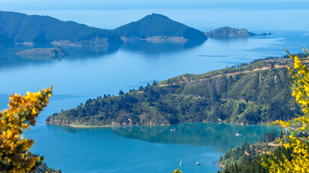 Picton New Zealand  city images : New Port Spotlight: Picton, New Zealand | Catalyst: